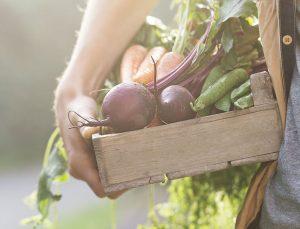alimentation naturelle fruits légumes optimalfood